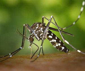 Preventing Mosquito Bites